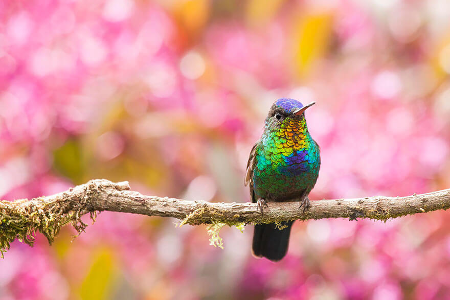 kolibri-26-15