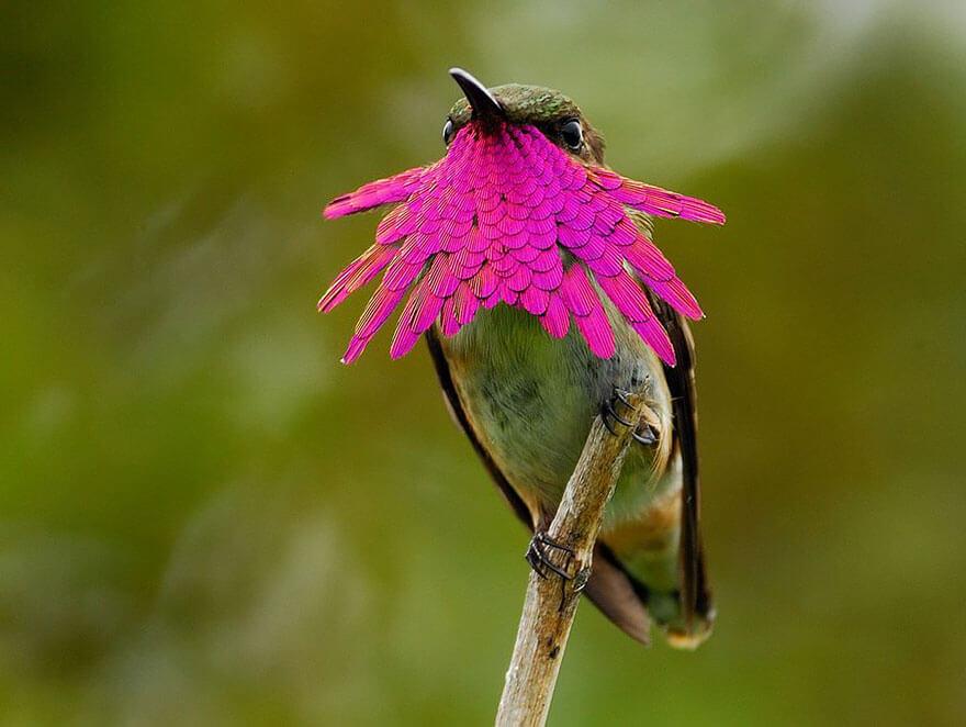 kolibri-26-2