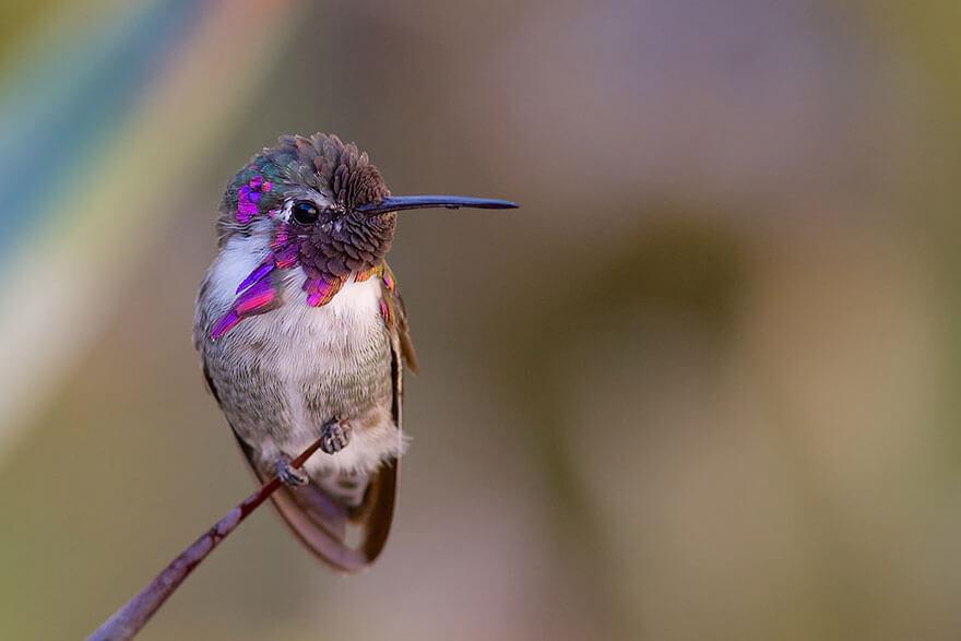 kolibri-26-4