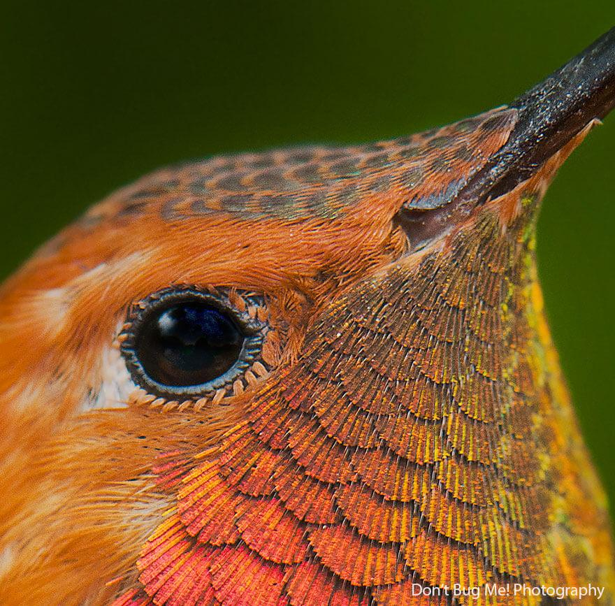 kolibri-26-5