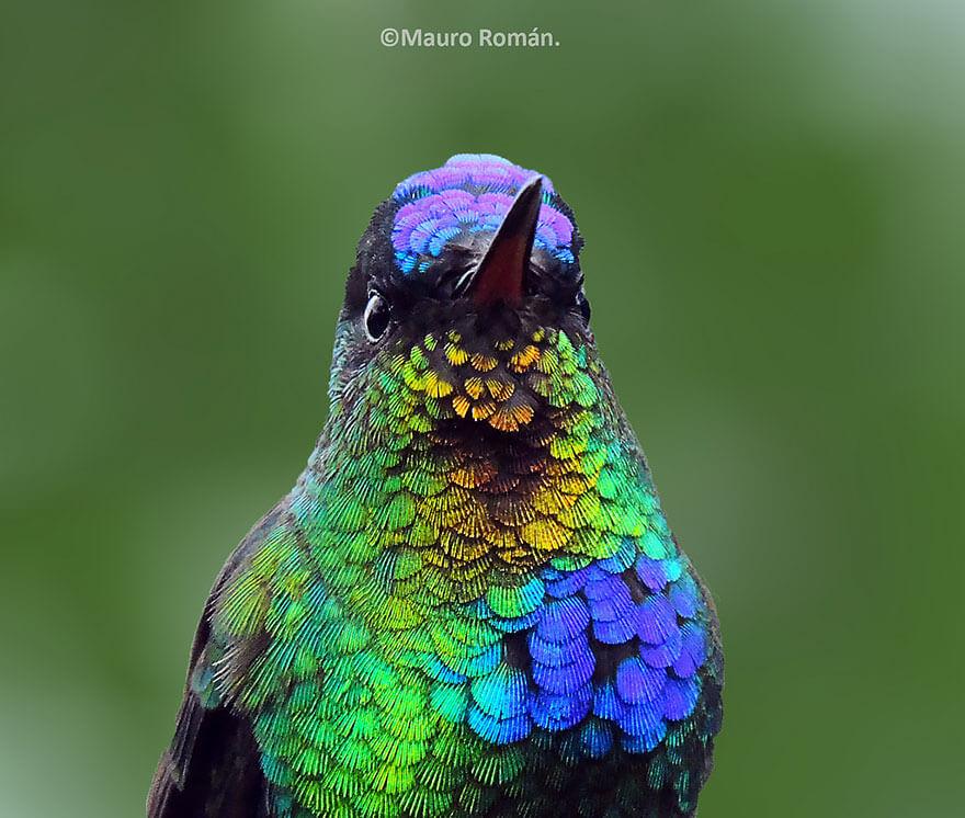 kolibri-26-7