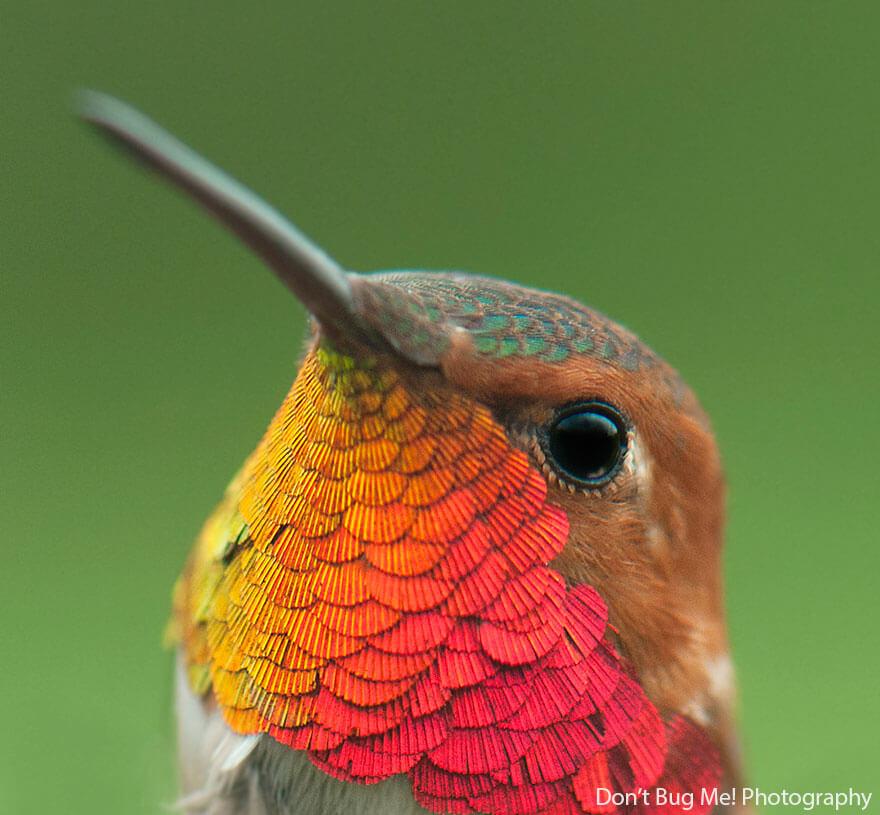 kolibri-26-8
