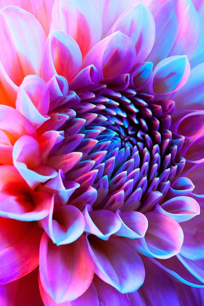 psihodelicheskie-cvety-29-9-660x990