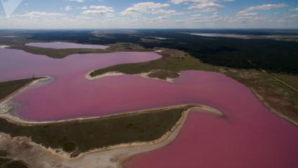 Розовый и соленый: невероятные озера Алтайского края
