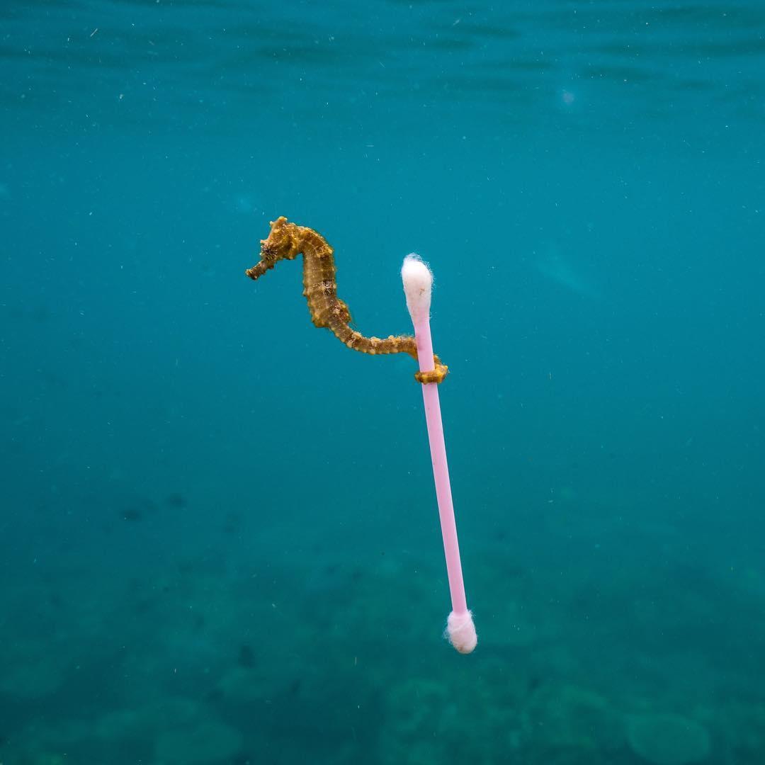 Белые жирафы, собака-политик и другие животные, которые удивили нас на этой неделе