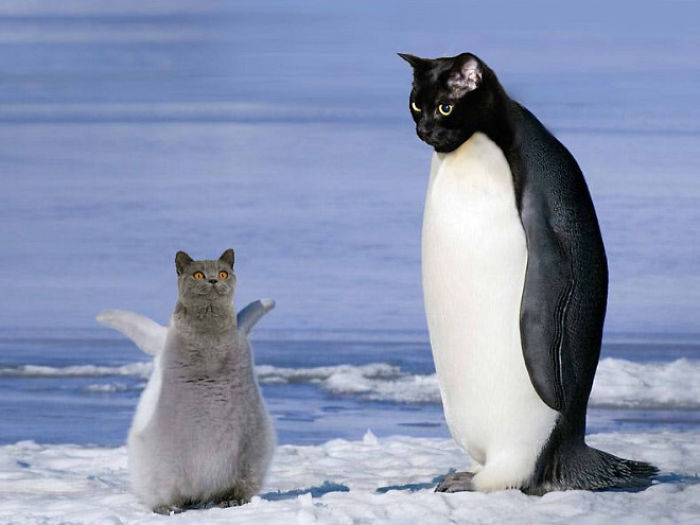 The-Internet-has-transformed-felines-and-birds-into-hybrid-animals-59b9d57eef555__700