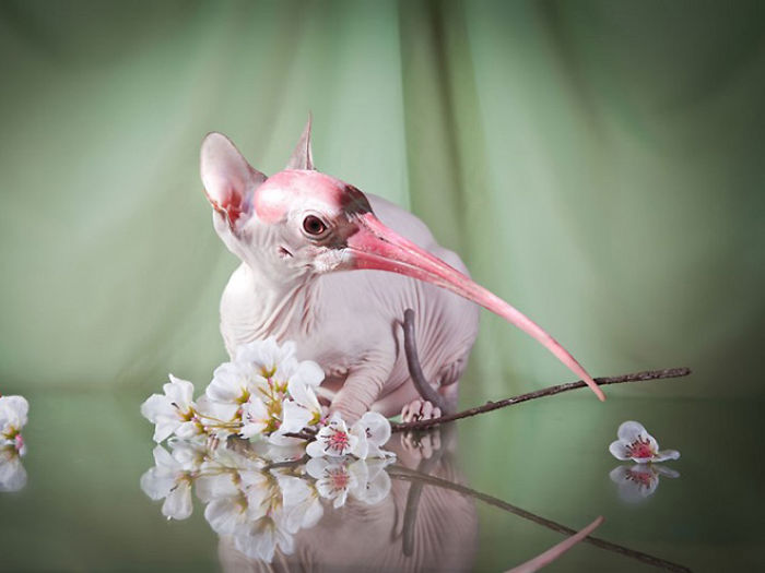 The-Internet-has-transformed-felines-and-birds-into-hybrid-animals-59b9d58c785af__700