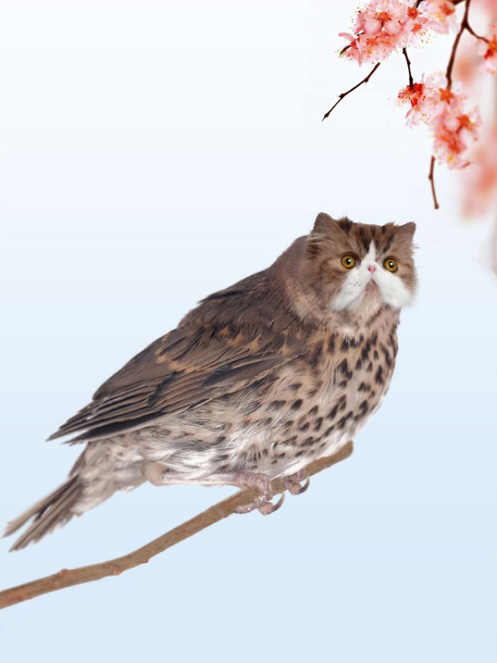 The-Internet-has-transformed-felines-and-birds-into-hybrid-animals-59b9d59ac7924__700