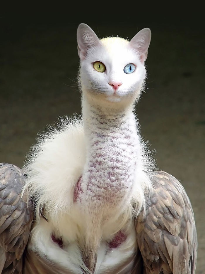 The-Internet-has-transformed-felines-and-birds-into-hybrid-animals-59b9d5d42c7a7__700