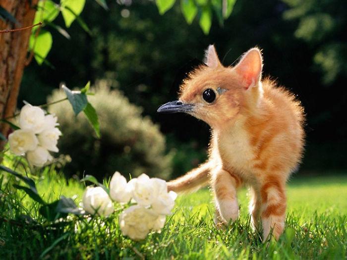The-Internet-has-transformed-felines-and-birds-into-hybrid-animals-59b9d5e2f3760__700