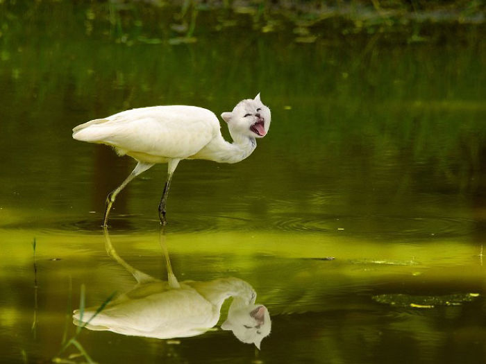 The-Internet-has-transformed-felines-and-birds-into-hybrid-animals-59b9d602a2494__700