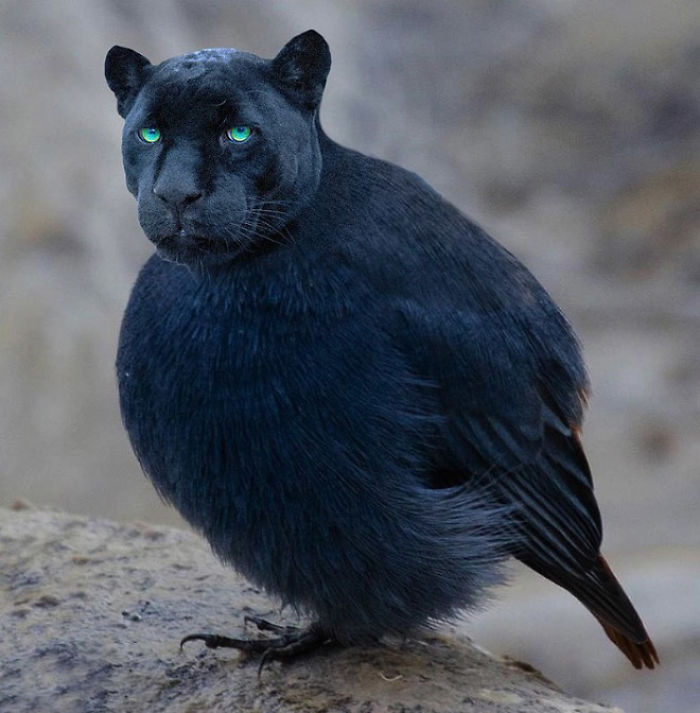 The-Internet-has-transformed-felines-and-birds-into-hybrid-animals-59b9d618e2568__700