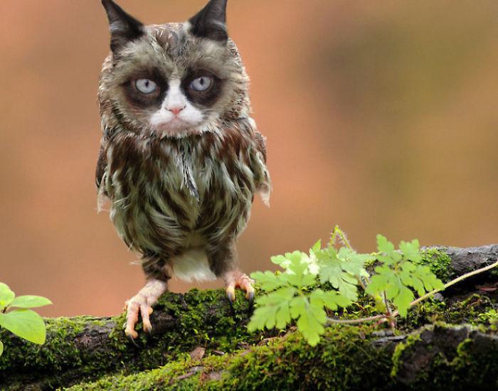 The-Internet-has-transformed-felines-and-birds-into-hybrid-animals-59b9d6397b050__700