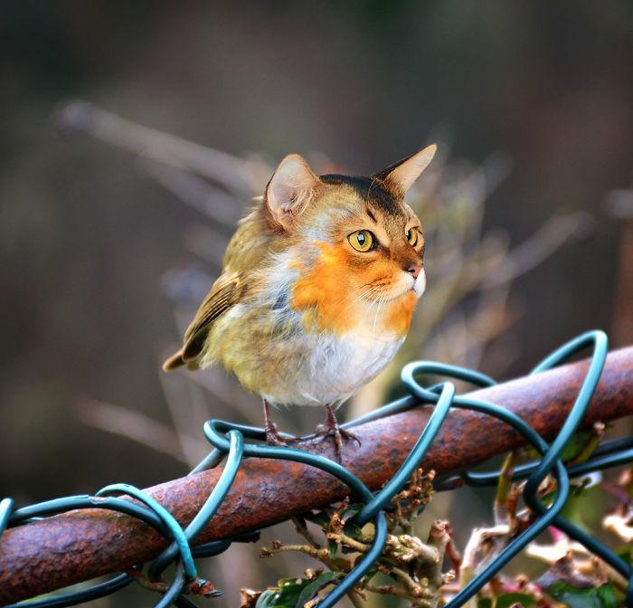 cat-bird-59ba4a62e7140__700