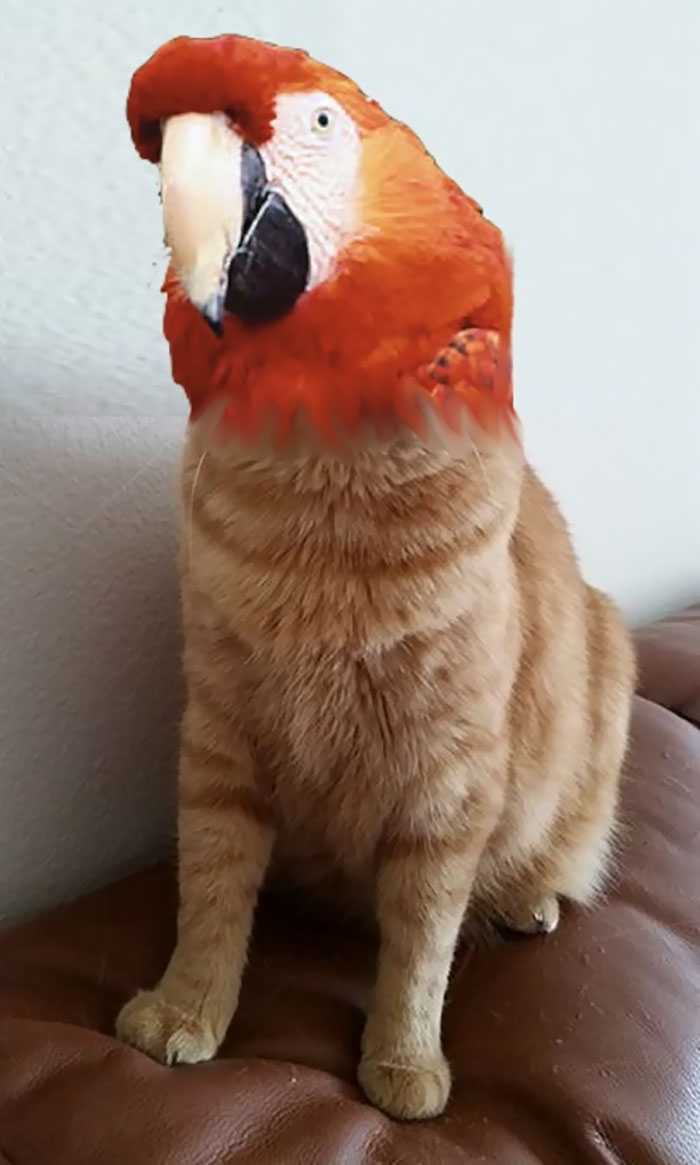 cat-birds-hybrid-animals-40-59ba953fd72d6__700