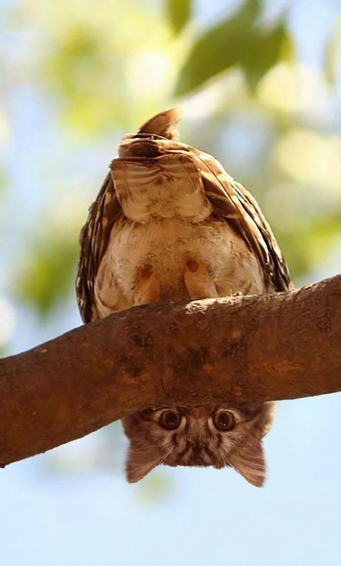 cat-birds-hybrid-animals-42-59bb767d10996__700