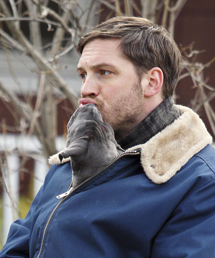love-for-dogs-tom-hardy-8-59bf7279b94c6__700