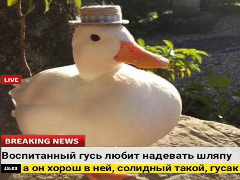 oDTzvK6FSmQ