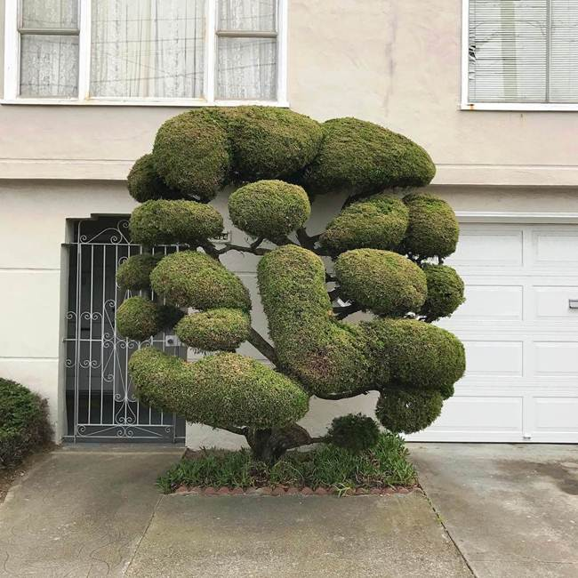 topiary-trees-of-san-francisco-003