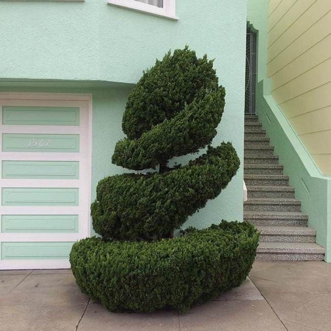 topiary-trees-of-san-francisco-004