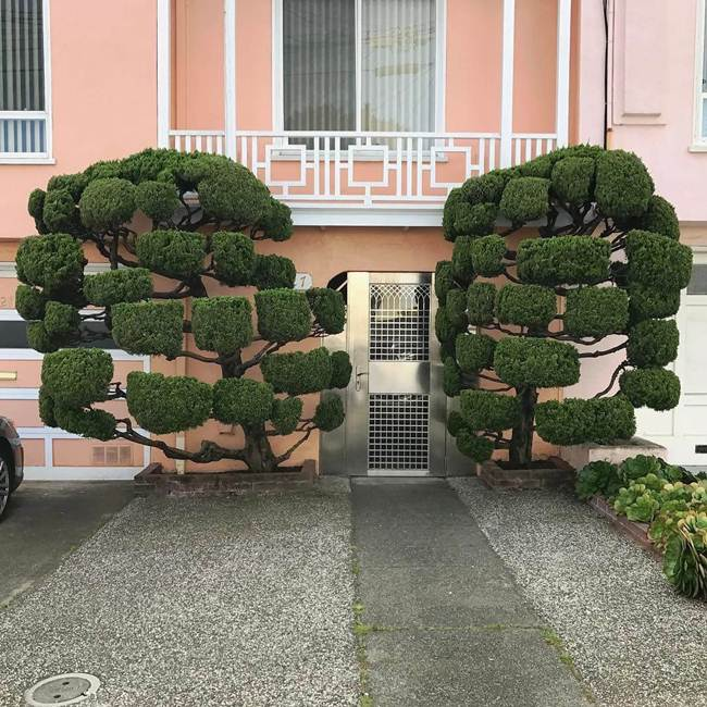 topiary-trees-of-san-francisco-007