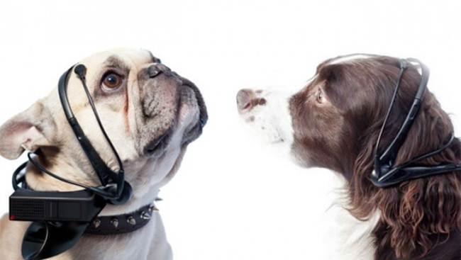 4-translator-for-dogs (1)