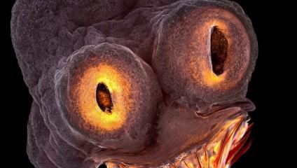 Мир под микроскопом: 9 лучших снимков конкурса Nikon Small World