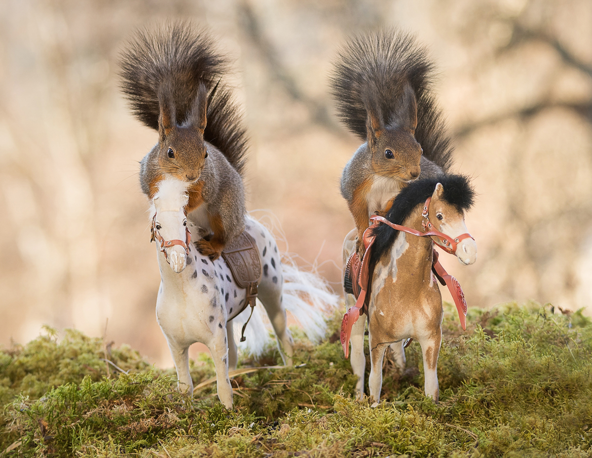 red squirrels standing on a horse