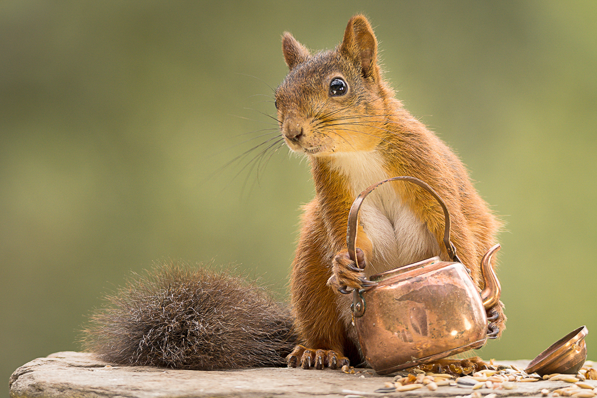 squirrel with teapot in hands
