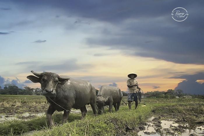 no-legs-arms-photographer-achmad-zulkarnain-indonesia-19