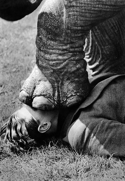 (GERMANY OUT) Elephant training: A foot of the elephant on the head of the artist  - around 1938 - Photographer: Presse-Illustrationen Heinrich Hoffmann  - Published by: 'Berliner Morgenpost' 27.11.1938  Vintage property of ullstein bild  (Photo by Heinrich Hoffmann/ullstein bild via Getty Images)