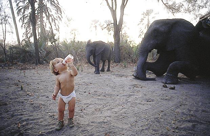 "TIPPI - THE REAL LIFE MOWGLI..***EXCLUSIVE, SPECIAL FEES***....***LEGAL NOTICE*** MANDATORY CREDIT MUST READ: PHOTOGRAPHY BY BARCROFT MEDIA / SYLVIE ROBERT FROM: TIPPI MY BOOK OF AFRICA....AFRICA: Shows Tippi, aged one and a half drinking from her bottle among an elephant herd in Okavango Swamps, Botswana. Picture taken 1992.....Little Tippi is the real-life Mowgli, a child who made her home with the animals just as Rudyard Kipling's young hero did in The Jungle Book. Showcased in her new book, ""Tippi: My Book of Africa"", these magical images chronicle the extraordinary life of a girl living freely in the African wilderness, sharing a unique bond with some of Africa's most beautiful wildlife. Born in Windhoek, Namibia in 1990, Tippi Benjamine Okanti Degre travelled through Africa for 10 years with her French parents, wildlife photographers Sylvie Robert and Alain Degr . From sitting on the back of an ostrich, lying peacefully with a lion cub or cuddeling with a caracal, these amazing pictures show an unusual"