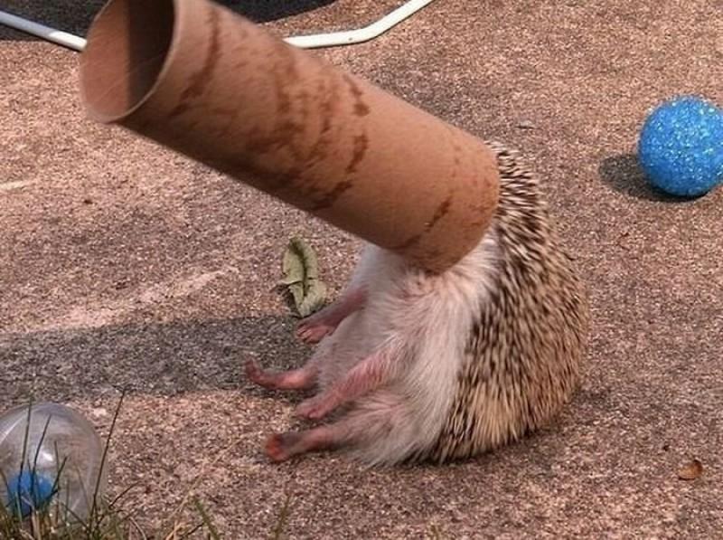 Очень смешные ситуации, где животные поплатились за своё любопытство