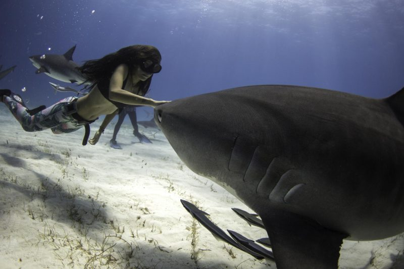 Interview-with-Shark-Activist-Madison-Stewart-17-800x533