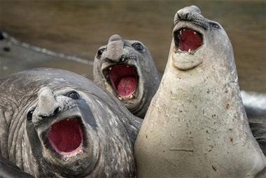 Финалисты Comedy Wildlife Photography Awards: ну очень смешные животные