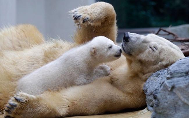 Вы удивитесь, но это детские фотографии самых свирепых хищников планеты