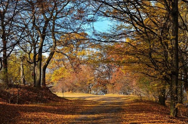 8176365-Hoia_toamna-Hoia_Forest_autumn_2012_-_panoramio-1512988918-650-4087e6881b-1513340929 (1)
