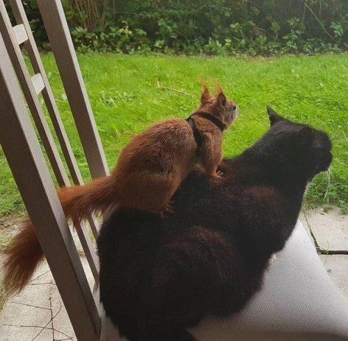 Неразлучные друзья бельчонок Тин-Тин и кот Тигр