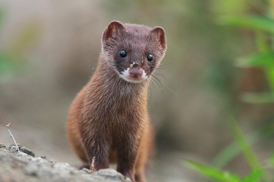 На уроках биологии такого не расскажут: редкие животные