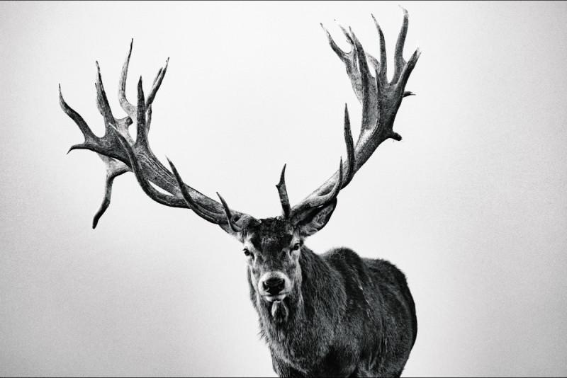 Deer-800x534 (1)