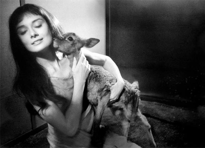 Hepburn13