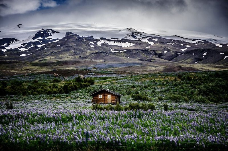 I was  driving on Iceland's Route 1 Ring Road and snapped this picture from the window while driving. I was struck by the beautiful transition of color from the sky to the purple meadow.  What a place to call home.