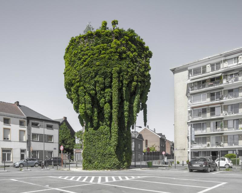tree-800x640