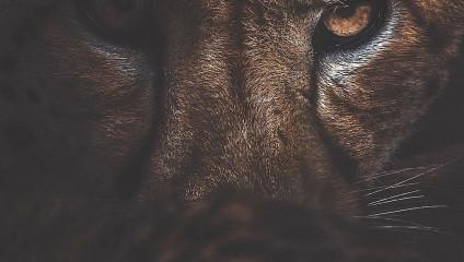 Магия дикой природы от фотографа Донала Бойда