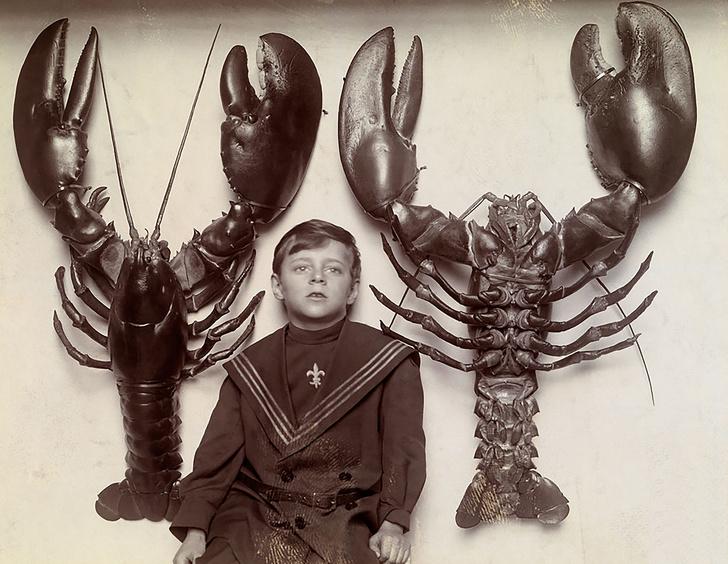 Мальчик между двумя лобстерами, выловленными у побережья Нью-Джерси. 1916 год