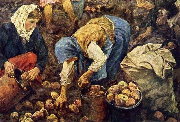 Долгий путь картошки от «чертового яблока» до главного овоща в России