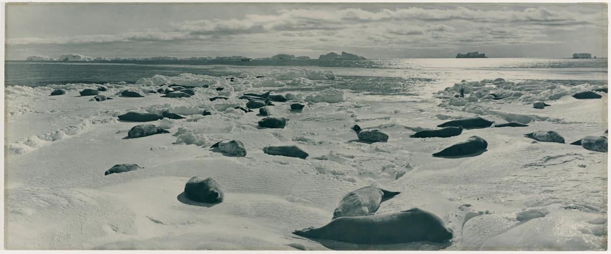 Antarctica_1911_fotograf_Frank_Hurley_19