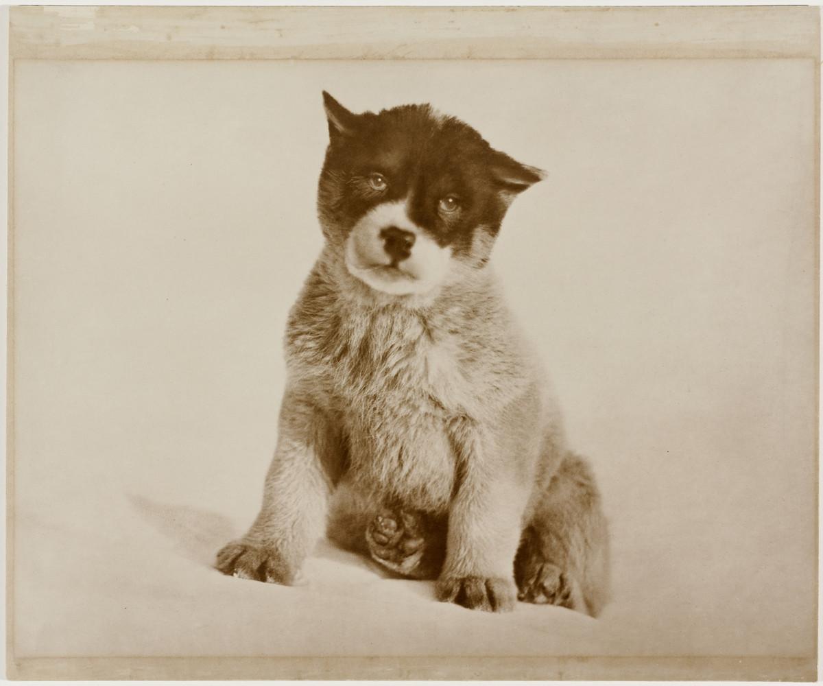 Antarctica_1911_fotograf_Frank_Hurley_22