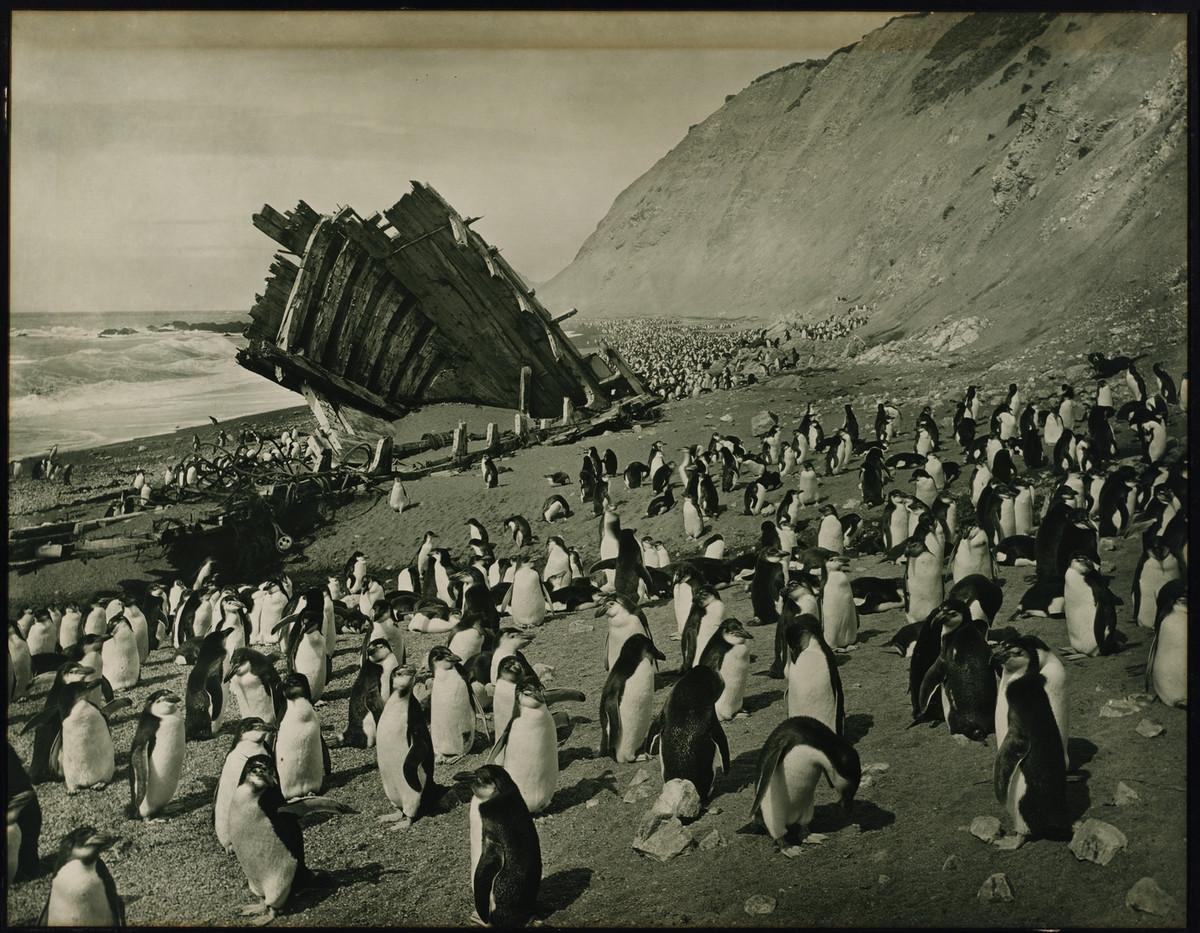 Antarctica_1911_fotograf_Frank_Hurley_33