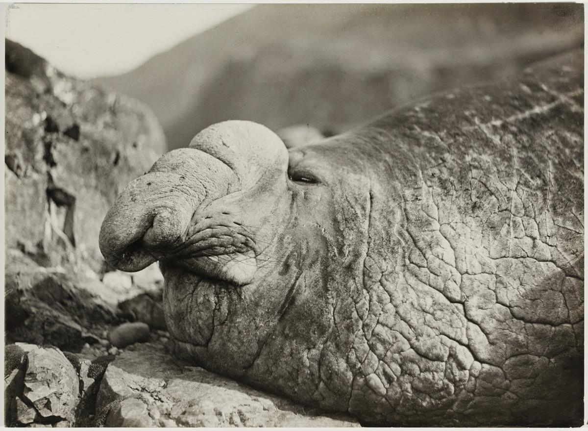 Antarctica_1911_fotograf_Frank_Hurley_35